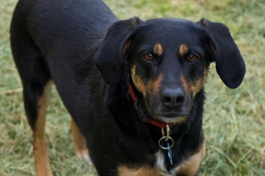 Lulu (1)